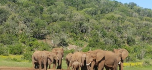 Trips To Addo Elephant National Park